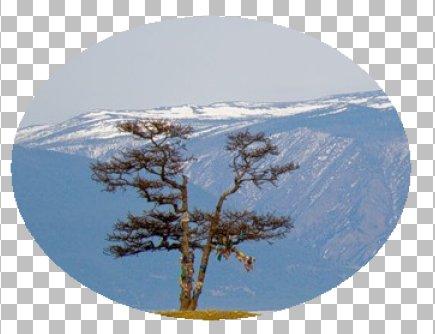Исходное изображение Corel PaintShop Pro X4 автор Шитов В.Н.