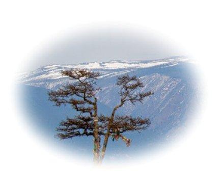 Размытое изображение Corel PaintShop Pro X4 автор Шитов В.Н.