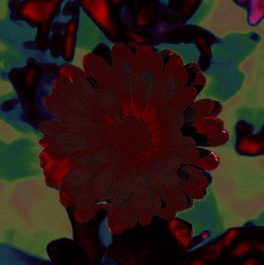 Выходное изображение Corel PaintShop Pro X4 автор Шитов В.Н.